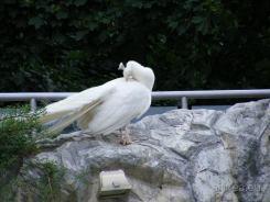 Fauna-Schonbrunn_0071