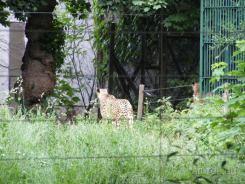 Fauna-Schonbrunn_0085