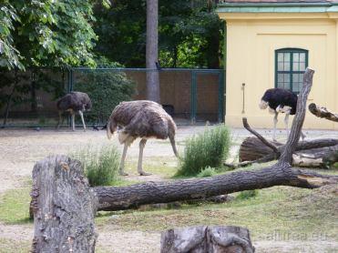 Fauna-Schonbrunn_0120