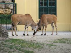 Fauna-Schonbrunn_0126