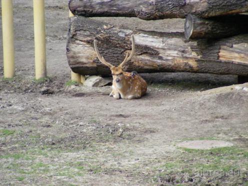 Fauna-Schonbrunn_0137