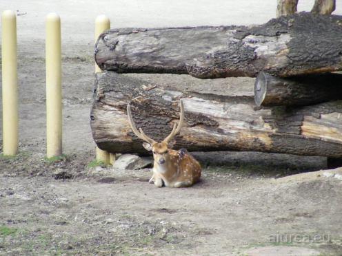 Fauna-Schonbrunn_0138