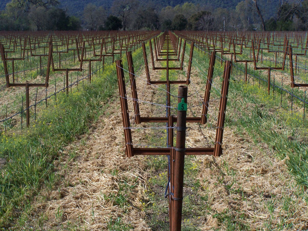 Welded Open Lyre Installed in The Vineyard