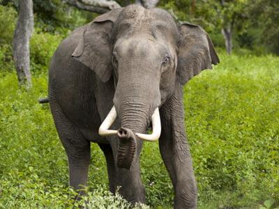 National heritage animal of india