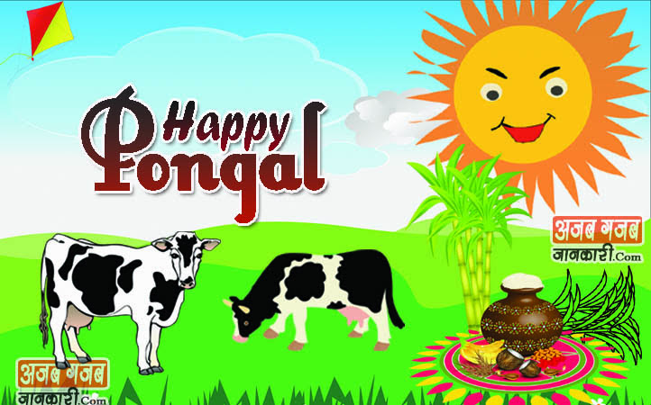 Pongal wishes quotes images in english 2018 greetings card happy pongal wishes quotes in hindi m4hsunfo Image collections
