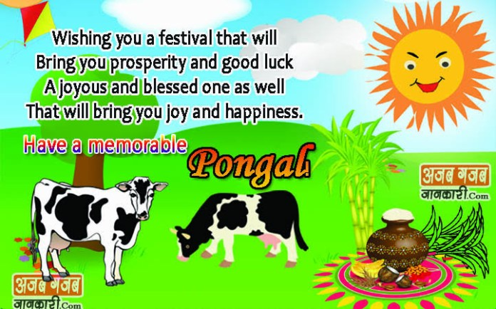 pongal wishes in english