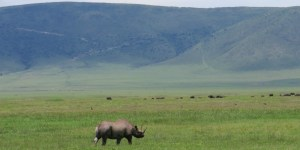 bottom ngorongoro crater rhino tanzania private safari