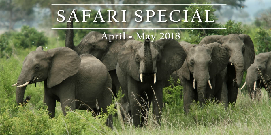 Special offer: 8-days private safari Tanzania – April & May 2018