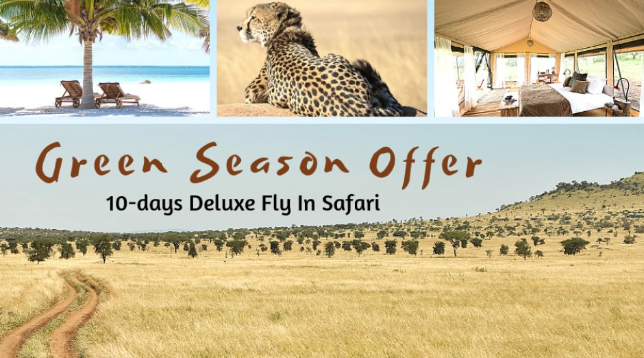 Green season Special Offer Private Safari Tanzania