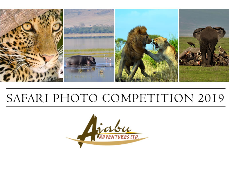 Photo Safari Competition 2019