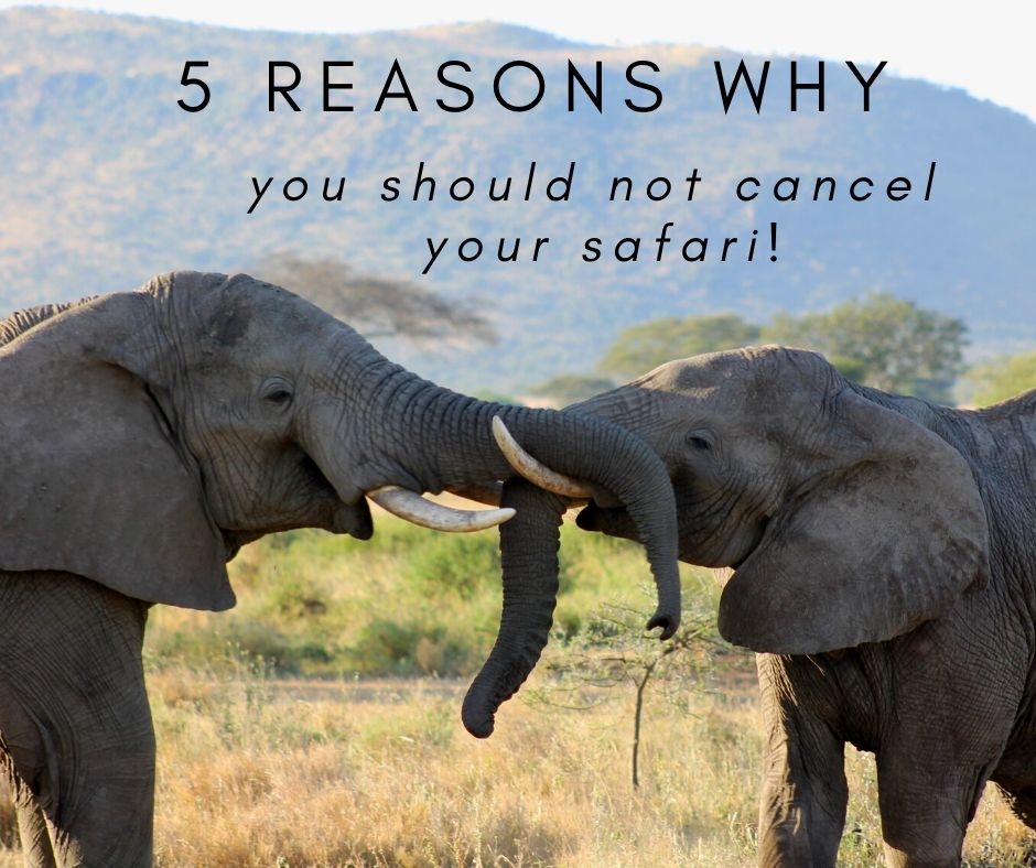 5x Why you should not cancel your safari but postpone