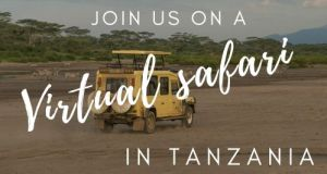 Join a virtual safari in Tanzania with Ajabu Adventures