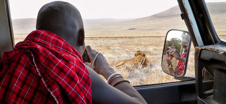 Become a lion guardian in Ngorongoro with KopeLion
