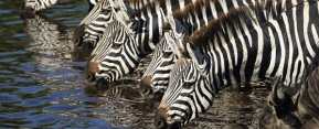 Private safari in Tanzania - wildlife viewing