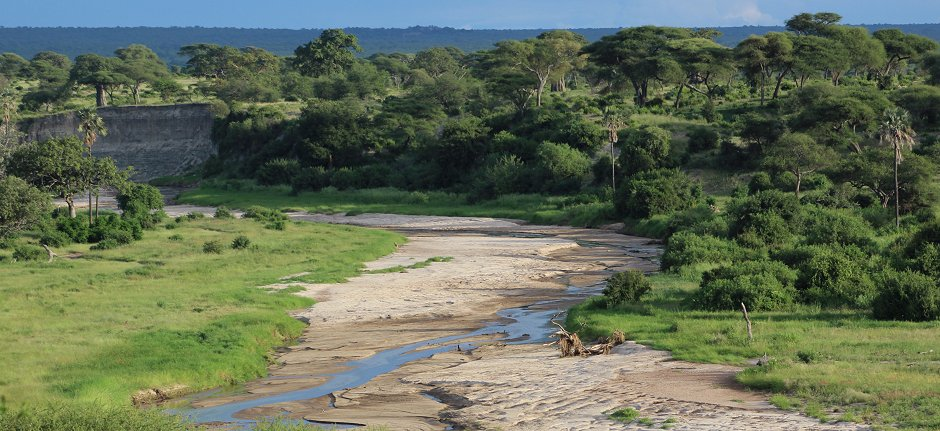 Tarangire River wildlife safari in Tanzania