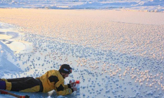 Fenomena Langka Padang Bunga Es Di Arktika