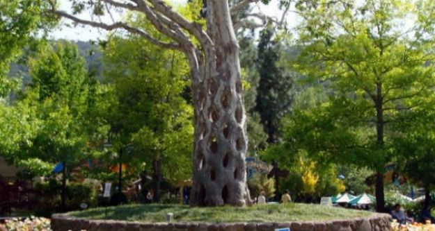 The Basket Tree