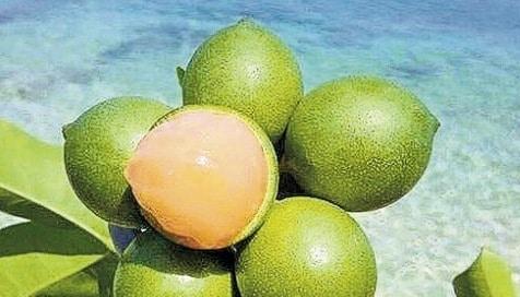 Jamaican Sweetsop Top 5 Exotic Fruits of...