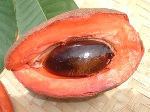 Mamey Sapote and it's vibrant rich color.