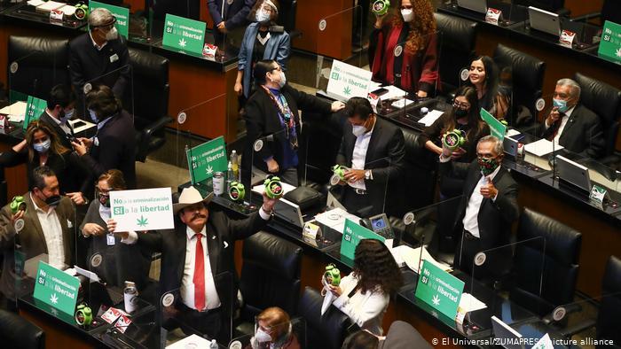 Meksika'da esrar yasağı kaldırılıyor