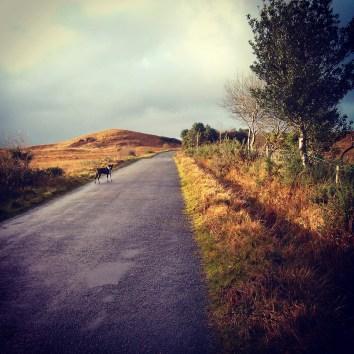 Landscape scene in Connemara with a dog