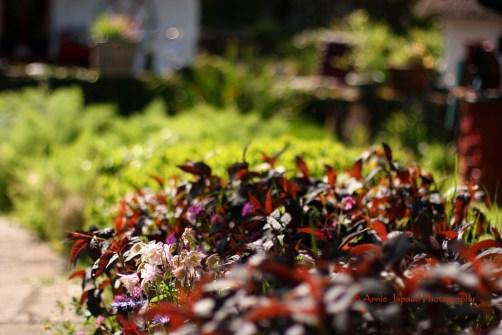 flowerbeds in the sunlight