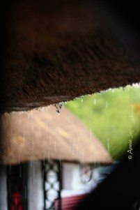 raining and dripping from thatched foof