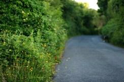 summer grasses bu the road