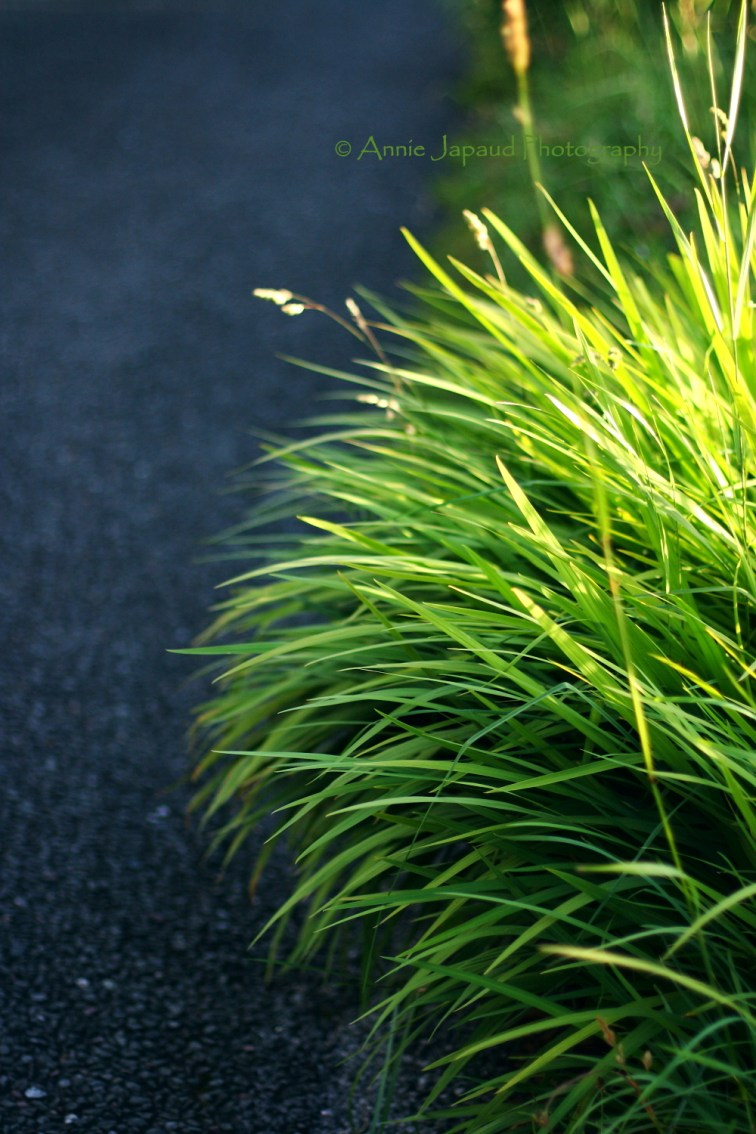 grasses by the road