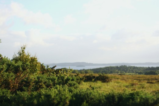 Lough Corrib and Connemara view