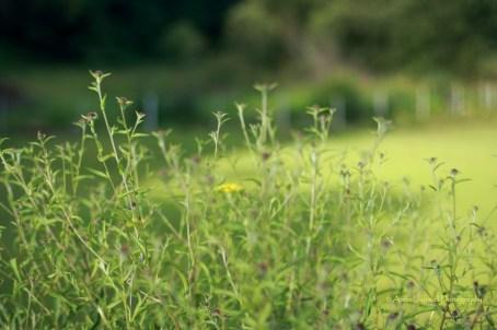 summer flowers, green