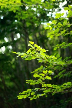 sunlight in the tree leaves