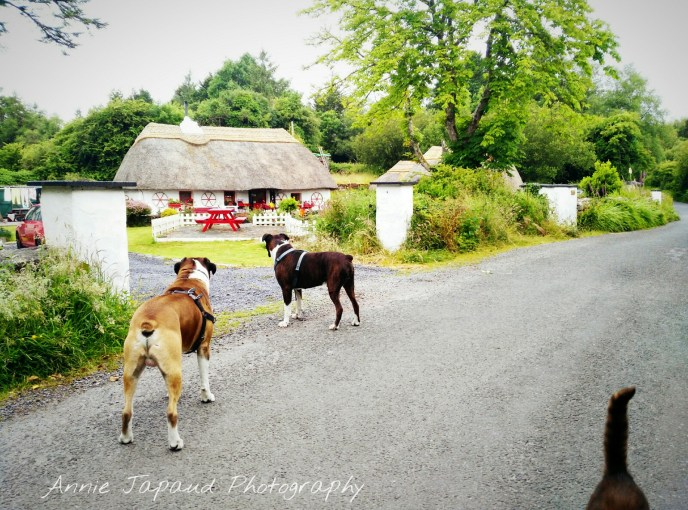 dogs and cats in front of a thatched cottage