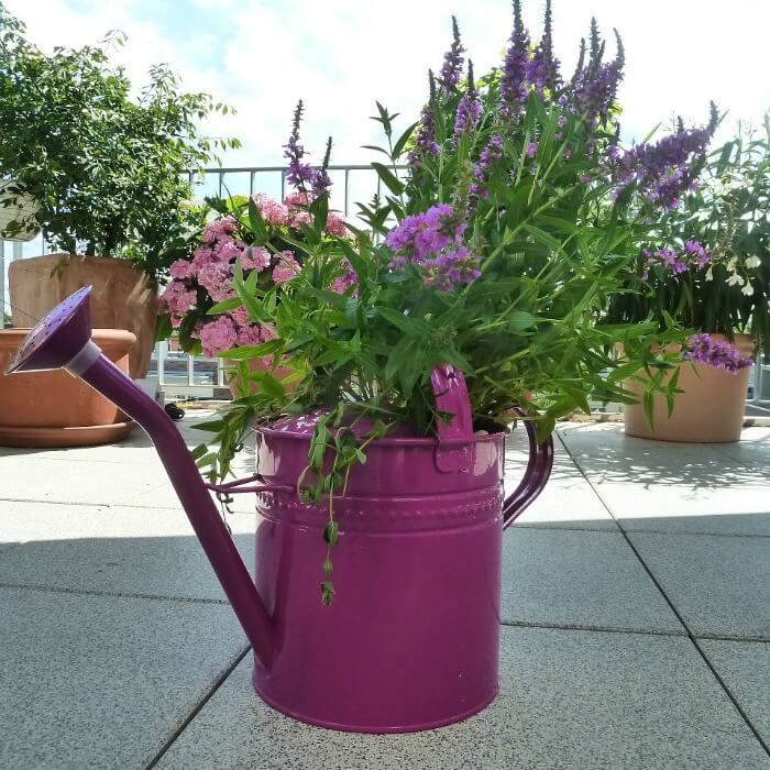 Watering Can Pot on Stairs