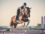 APC Horse pic_Anni Gabud