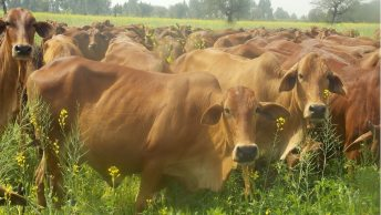 Managerial Experience via Managing Experience Ajay Pandey Cattle Management