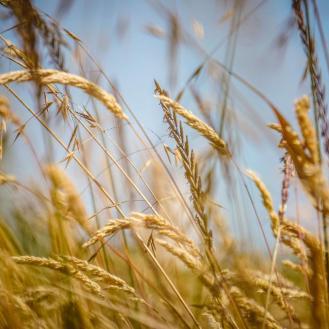 Grass around Cattle Pt