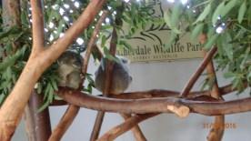 Featherdale Wildlife Park Doonside NSW 30 05 2016.13