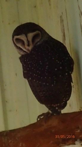 Featherdale Wildlife Park Doonside NSW 30 05 2016.18