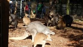 Featherdale Wildlife Park Doonside NSW 30 05 2016.37