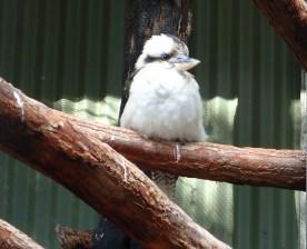 Featherdale Wildlife Park Doonside NSW 30 05 2016.4