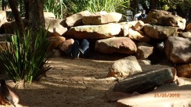 Featherdale Wildlife Park Doonside NSW 30 05 2016.43