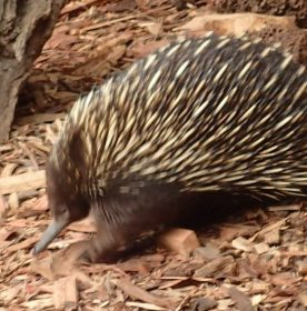 Featherdale Wildlife Park Doonside NSW 30 05 2016.45