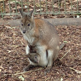 Featherdale Wildlife Park Doonside NSW 30 05 2016.7