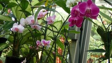 Orchids-Latitude 23