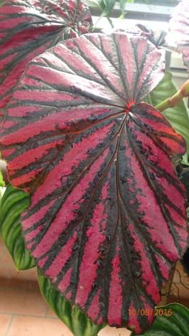 Varigated Leaves in Latitude 23