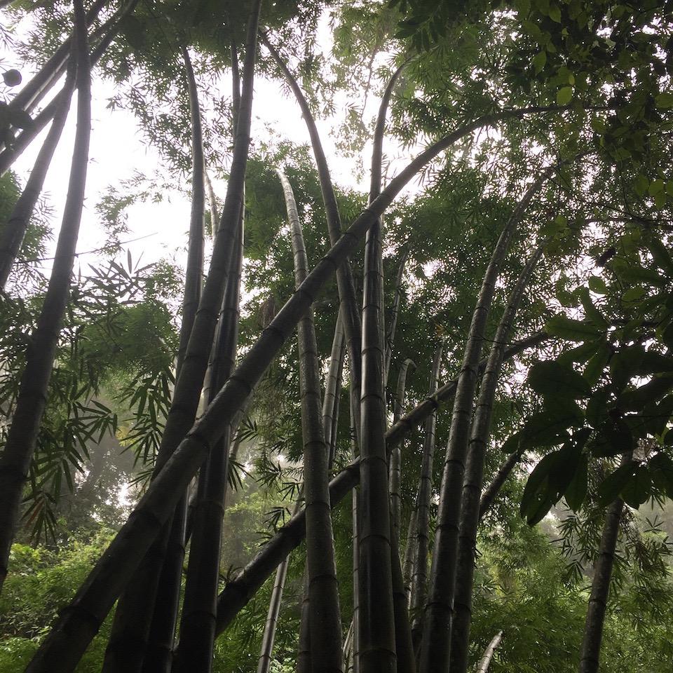 casaroro-bamboo