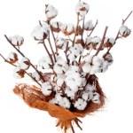 bouquet-de-fleurs-de-coton