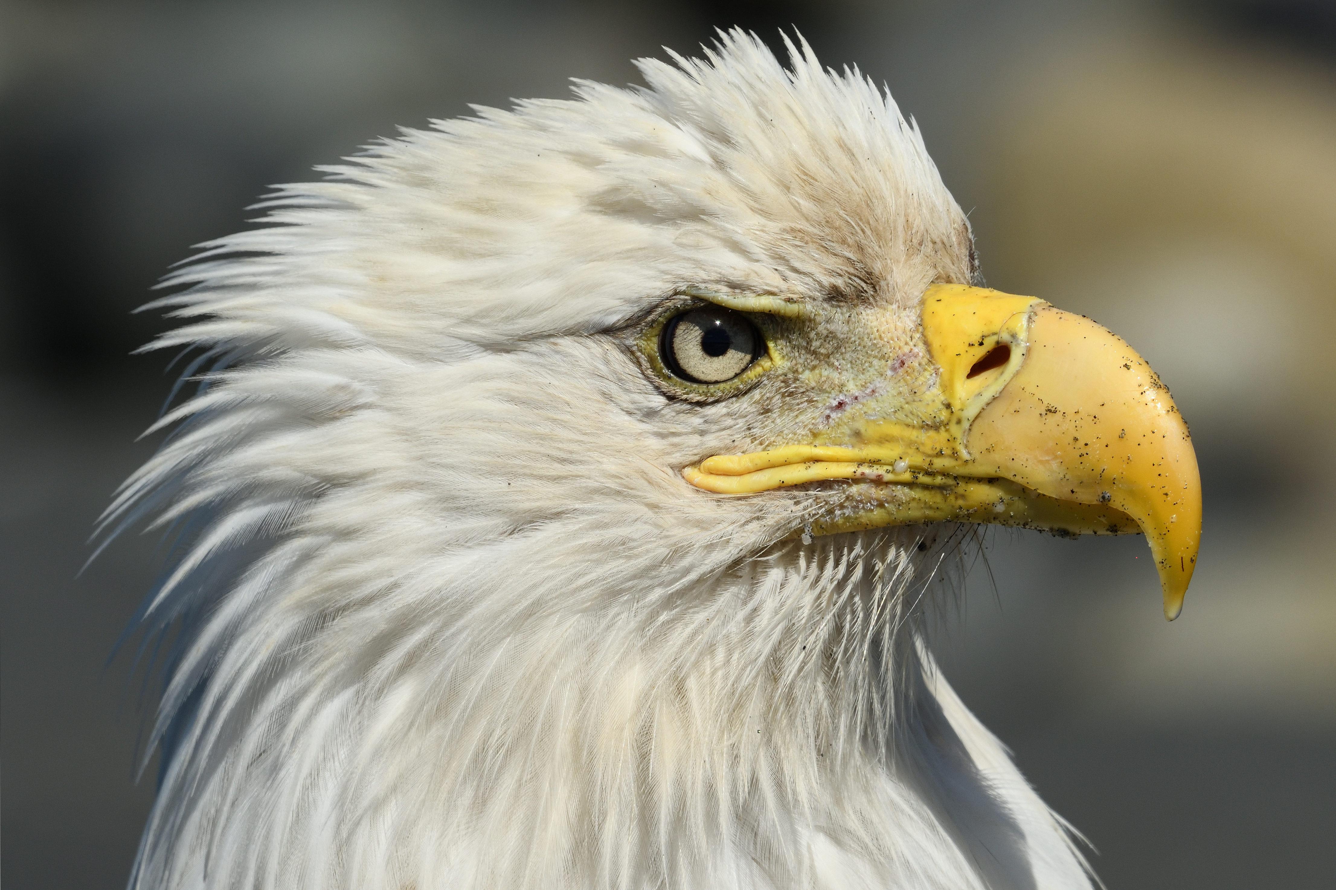 Bald eagle workshop
