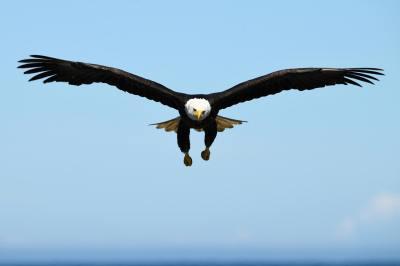 Bald Eagle Photography Workshop in Homer, Alaska